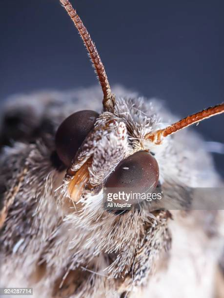 moth - bug eyes stock photos and pictures
