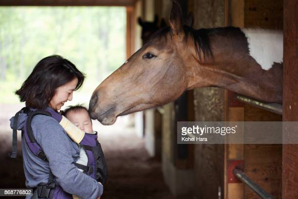 mother and baby communicating with a horse in the horse stable - 1 woman 1 horse fotografías e imágenes de stock