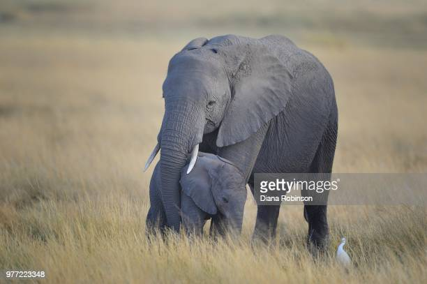 Mother and baby elephant, Amboseli National Park, Kenya