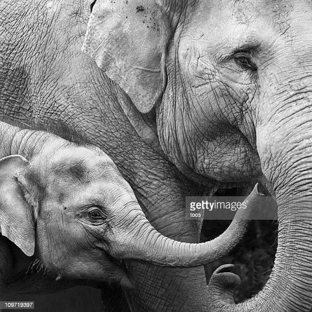 Mother and Baby Elephant - Close-up