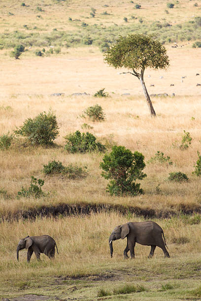 Mother And Baby Elephant In Savanna Wall Art