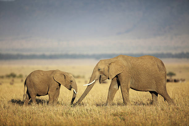 Mother And Baby Elephant Wall Art
