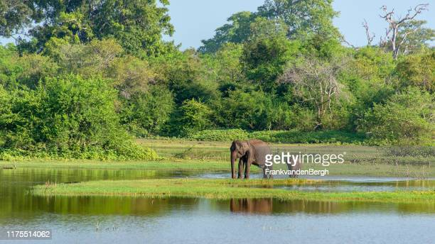 mother and baby elephant - asian elephant stock pictures, royalty-free photos & images