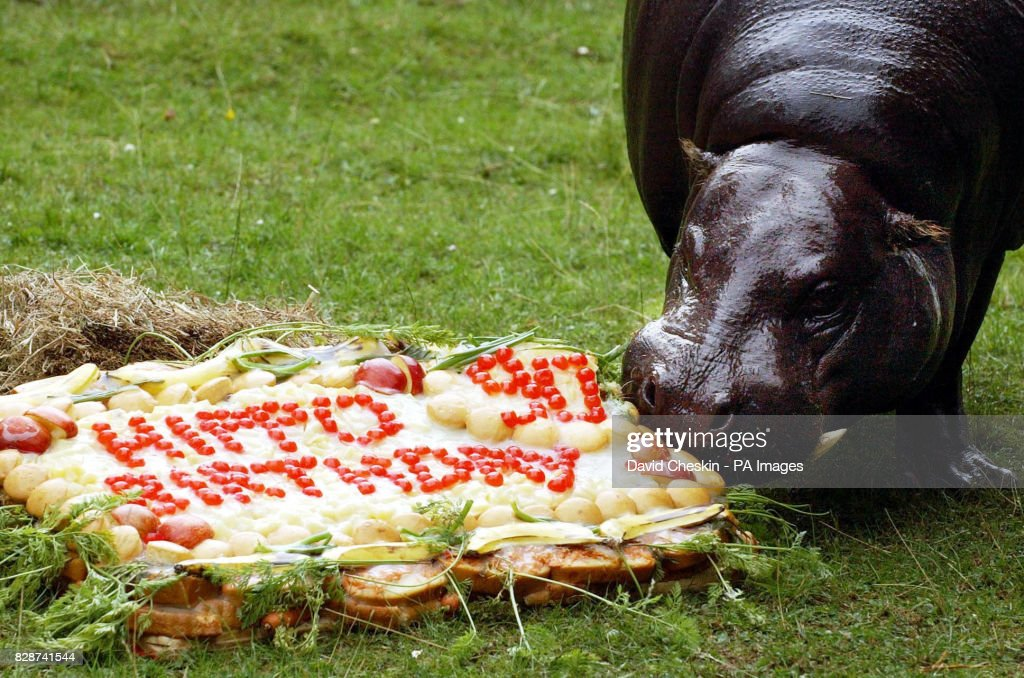 Edinburgh Zoo 90th Birthday Pictures Getty Images