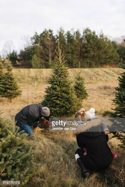 Mother and baby watching man cut tree in Christmas tree farm, Cobourg, Ontario, Canada