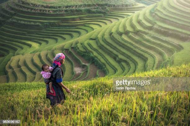 mother and child at mu cang chai,vietnam - rice terrace stockfoto's en -beelden