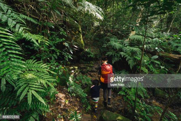 Mother and child hiking in jungle together, Iriomote-jima