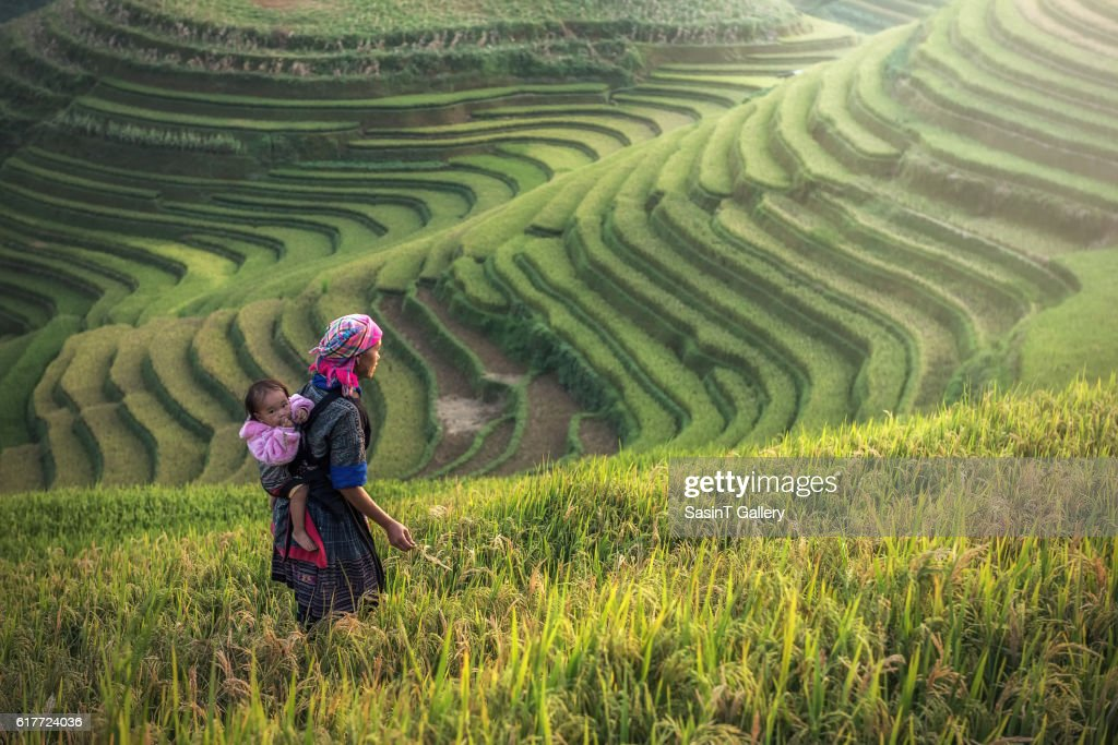 Mother and child Hmong, working at rice terraces : Foto de stock
