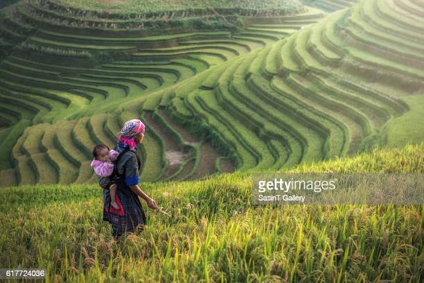 mother and child hmong, working at rice terraces - cultura indígena fotografías e imágenes de stock
