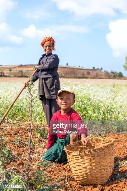 mother and child working in a field, myanmar - myanmar stock pictures, royalty-free photos & images