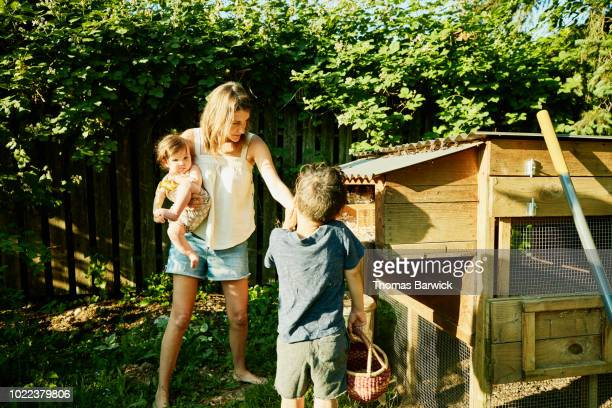 mother and children gathering fresh eggs from chicken coop in backyard - family with two children stock photos and pictures