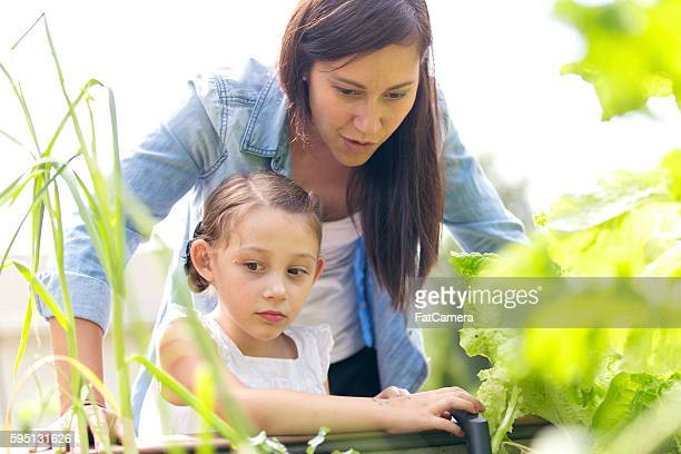Mother and daughter enjoy gardening  and planting together outdoors