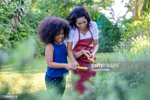 mother and daughter enjoy gardening. mom teaches daughter to do pruning plants with scissors. - ナチュラルヘア ストックフォトと画像