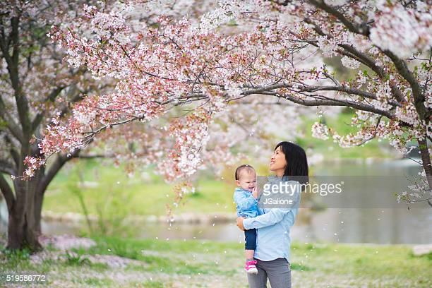 母と娘を楽しみながら、桜の花