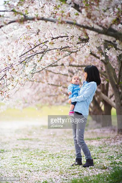 mother and daughter enjoying the cherry blossoms - japanese girls hot stock photos and pictures
