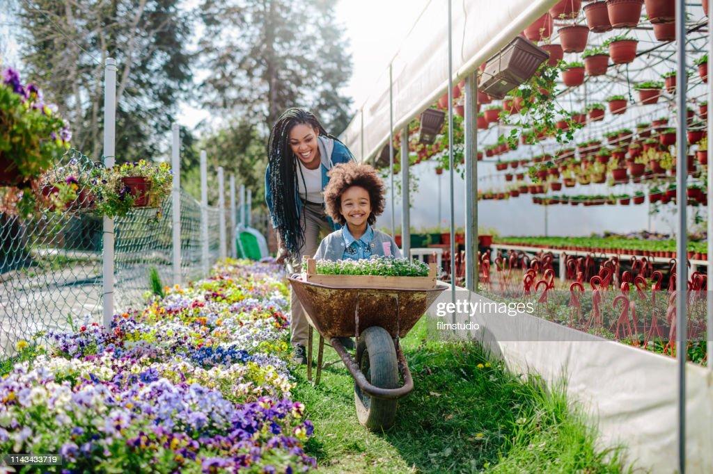 Jardinagem da matriz e da filha : Foto de stock
