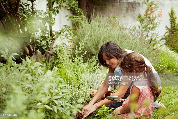 mother and daughter gardening - tuinieren stockfoto's en -beelden