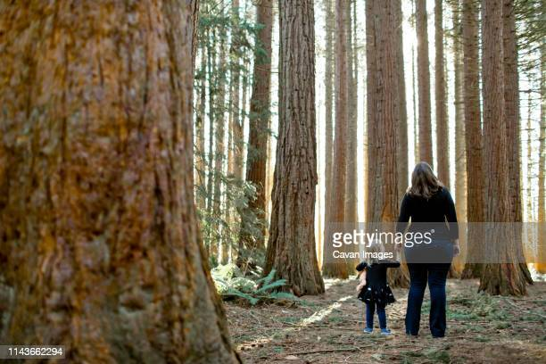 mother and daughter look up in awe of redwood forest. - national landmark stock pictures, royalty-free photos & images