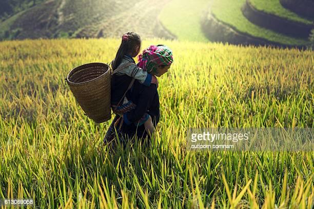 mother and daughter on cornfield - ミャオ族 ストックフォトと画像