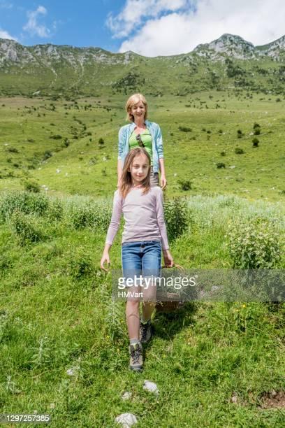 madre e hija en mountain meadow en verano recogiendo la menta salvaje de la montaña - mint plant family fotografías e imágenes de stock