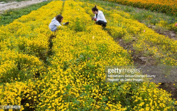 Mother and daughter pick weeds at the Native Seed Farm in Irvine, CA on Wednesday, March 27, 2019. The public can work on the farm two days a week to...