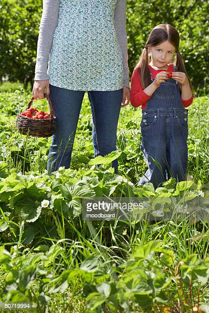 Mother and Daughter Picking Strawberries