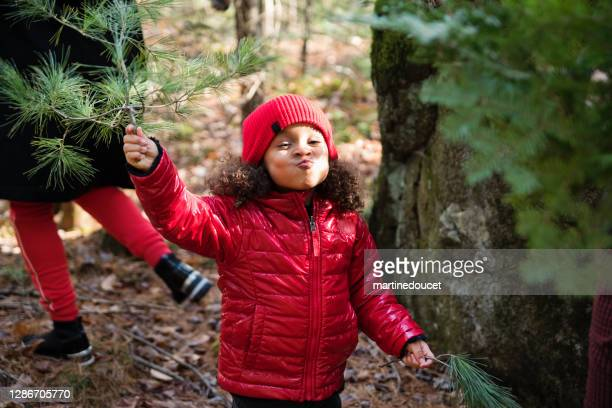 """mother and daughter picking up fir branch in forest for diy project. - """"martine doucet"""" or martinedoucet stock pictures, royalty-free photos & images"""