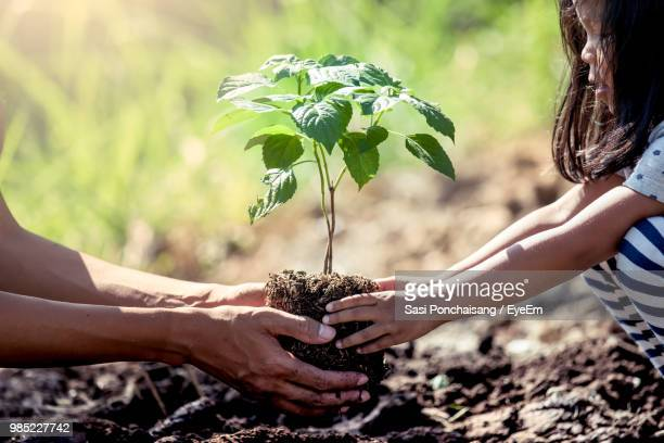 mother and daughter planting on field - planting stock pictures, royalty-free photos & images