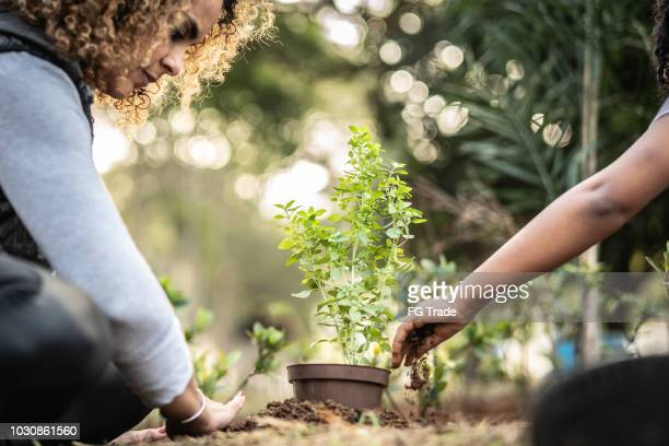 mother and daughter planting young tree on black soil as save world concept - morality stock pictures, royalty-free photos & images