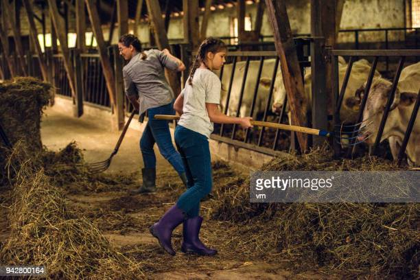 mother and daughter preparing hay for the cows - livestock stock photos and pictures