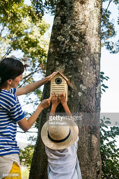 mother and daughter putting a bird house on a tree. - 麦わら帽子 ストックフォトと画像