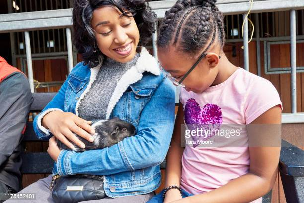 mother and daughter stroking guinea pig in farm - animal cruelty stock pictures, royalty-free photos & images