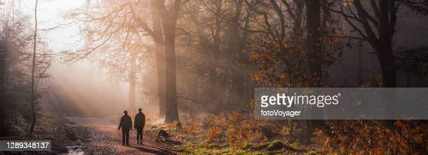 mother and daughter walking dogs in tranquil misty woods panorama - rural scene stock pictures, royalty-free photos & images