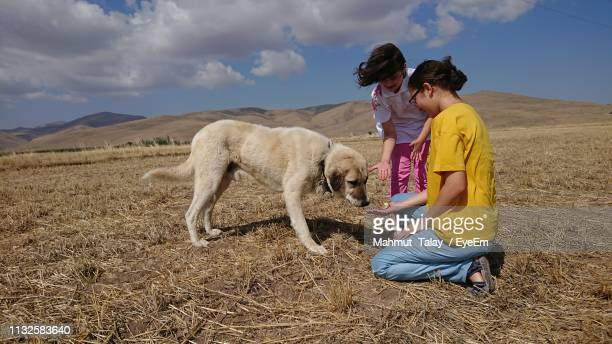 mother and daughter with dog on field during summer - dog eats out girl stock pictures, royalty-free photos & images