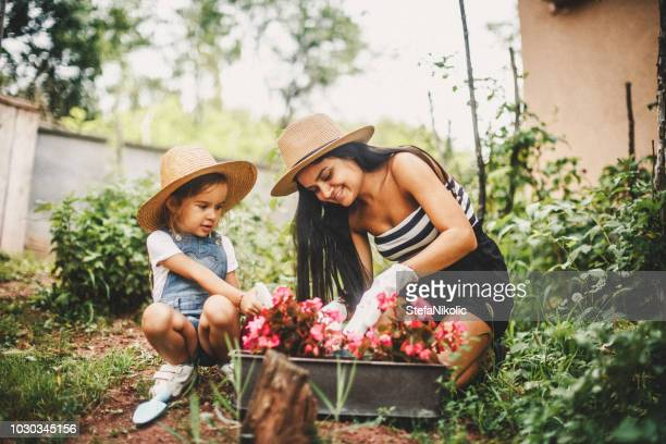 mother and daughter working in the garden - flowerbed stock pictures, royalty-free photos & images