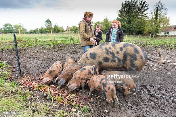 Mother and daughters feeding the pigs