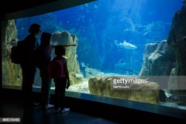母と娘の大きな水族館で魚を見て