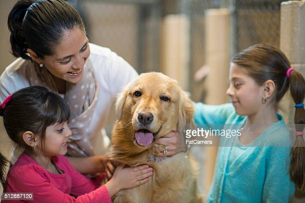 mother and daughters petting a dog - humane society stock pictures, royalty-free photos & images
