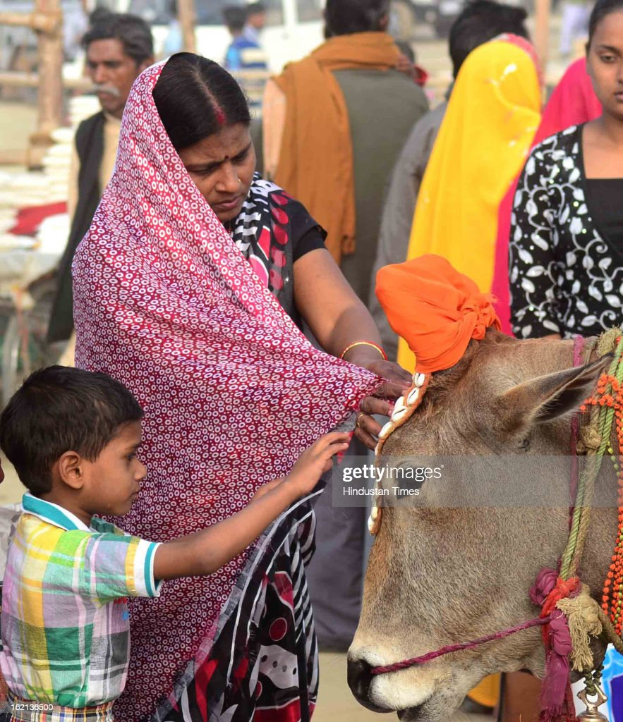 A mother and her child caress a cow while seeking its blessings on the banks of Sangam, in the Kumbh Mela area, on February 19, 2013 in Allahabad, India. The next and second last official bathing of Maha Kumbh 2013 is set to take place on 'Maghi Purnima' on February 25.