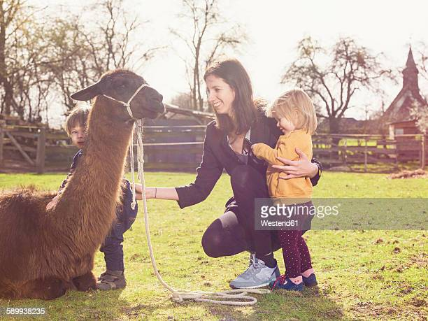 Mother and her little children with a llama on a paddock