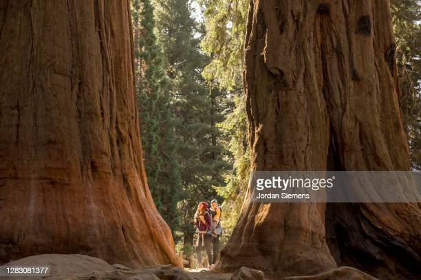 a mother and her son hiking in sequoia national park. - distant stock pictures, royalty-free photos & images