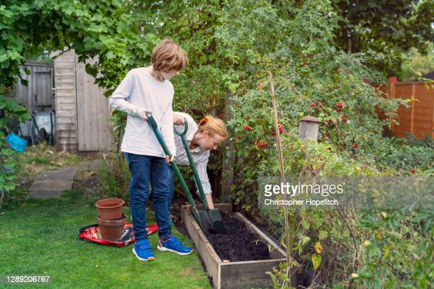 a mother and her teenage son digging compost into a raised bed - garden stock pictures, royalty-free photos & images