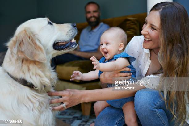mother and new born baby playing with puck dog, father in background - baby human age stock pictures, royalty-free photos & images