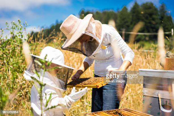 Mother and son examining honeycomb frame while standing on field