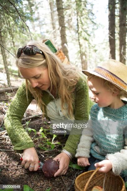 mother and son foraging for mushrooms in forest - foerageren stockfoto's en -beelden