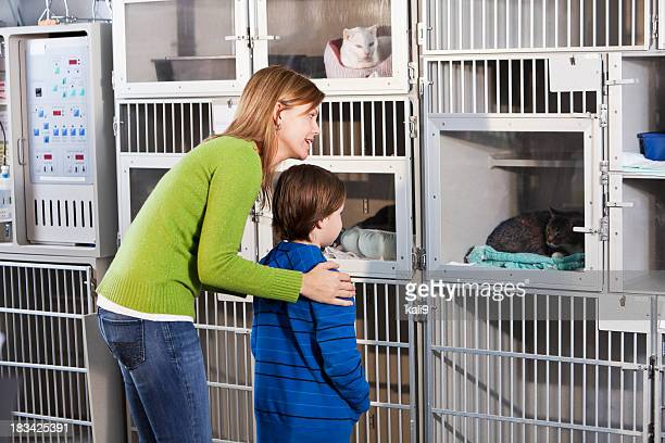 Mother and son looking at cats in animal shelter