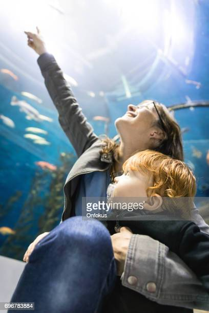 mother and son looking at fish in aquarium - fish love stock photos and pictures