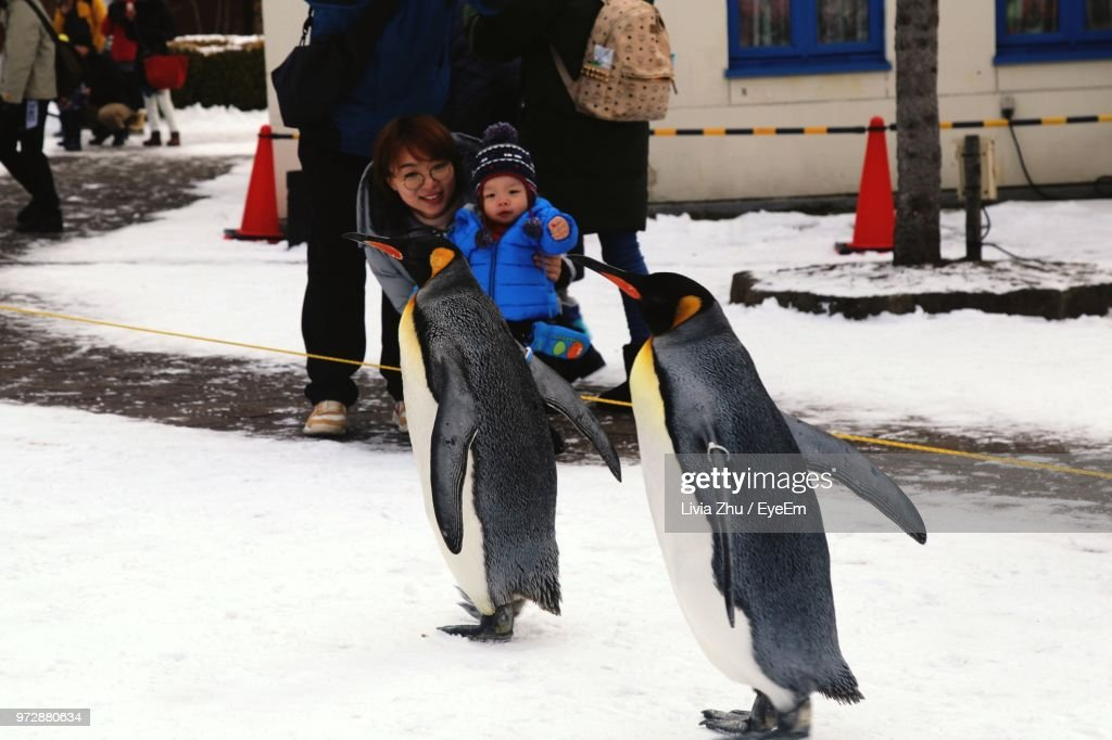 Mother And Son Looking At Penguin Walking On Snow : Stock Photo