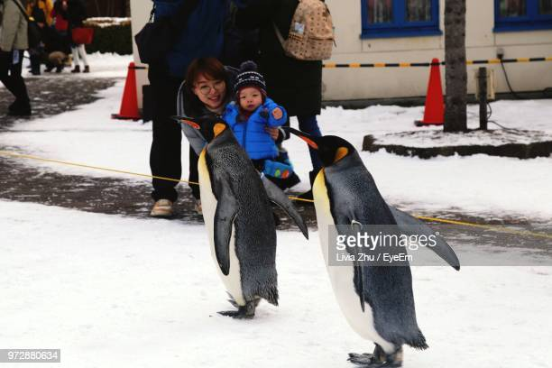 mother and son looking at penguin walking on snow - baby penguin stock photos and pictures