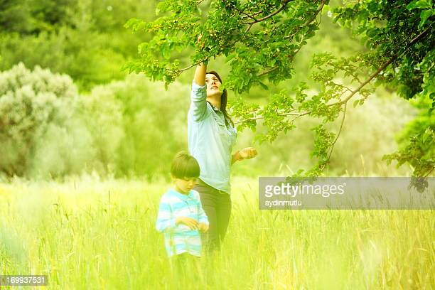 mother and son - mulberry tree stock pictures, royalty-free photos & images
